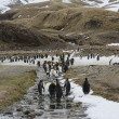 The penguin colony of South Georgia – A trip to the Antarctica